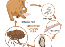 What Do Flea Eggs Look Like