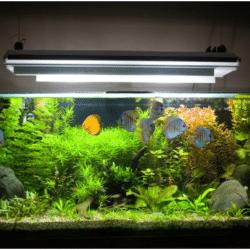 fish tank sizes