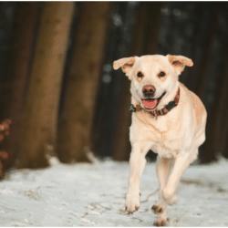 walking a dog in winter
