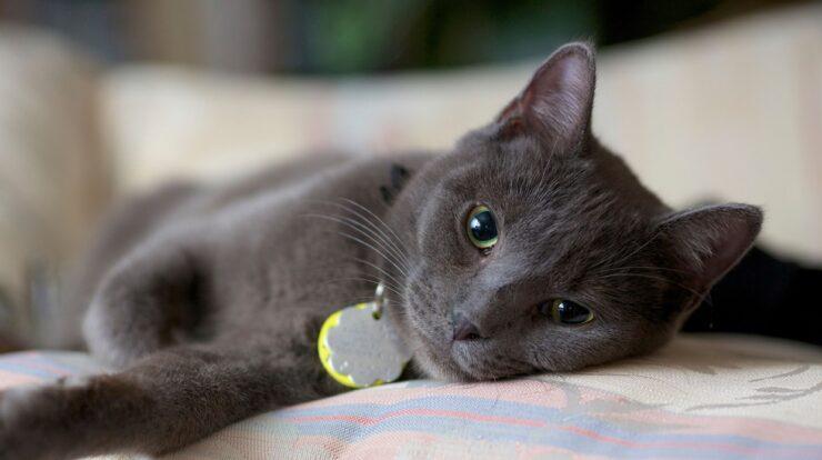 Make Your Cat Live Longer