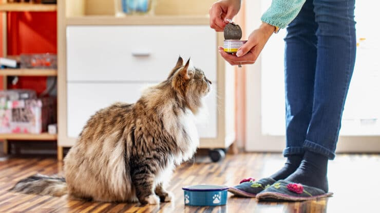 human foods for cats
