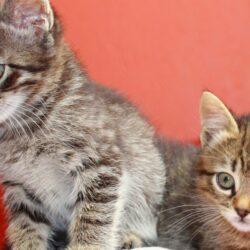 kitten age