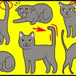 Cat's Tail Language