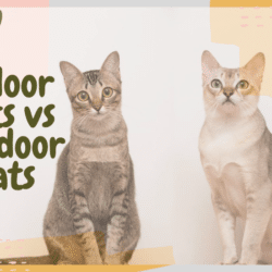 indoor vs outdoor cats