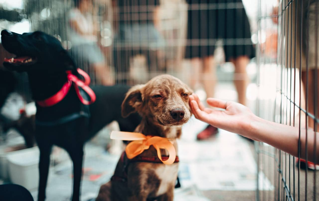 Qualities of Pet Puppies