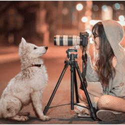 hiring pet photographers