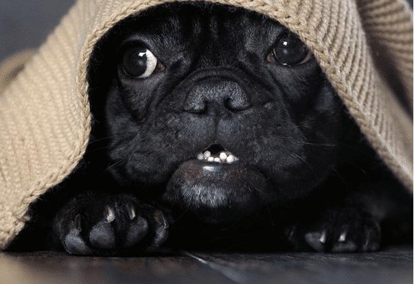 train a puppy