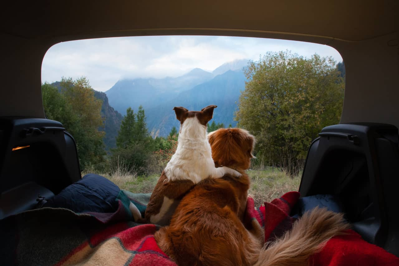 Downsides Of Camping With Dogs