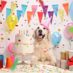 Party Ideas For Your Dogs Birthday Celebration