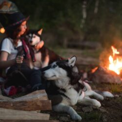 Pros And Cons Of Camping With Dogs