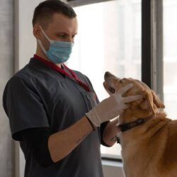The Best Unknown Benefits of Pet Insurance