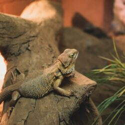 Looking For A First Reptile Pet