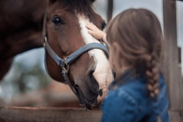 horse ownership