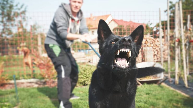 Canine Training Tips And Practices To Avoid Aggressive Behavior