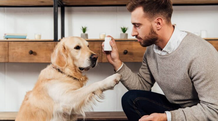 Natural Supplements For Dogs And Their Benefits